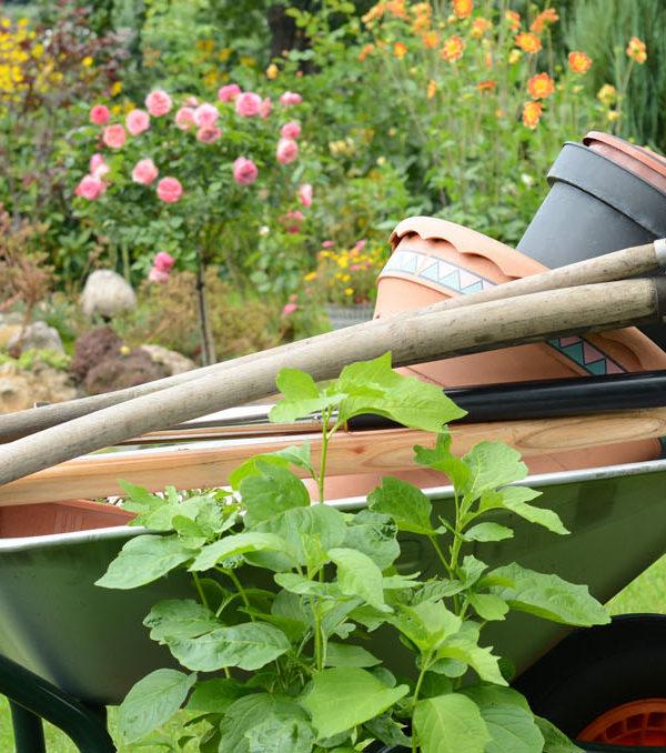 BlumenMarkt René de Clercq / Gartenpflege